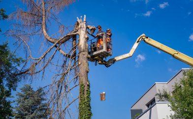 Baum sicher fällen